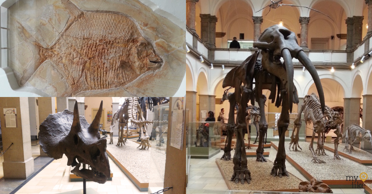 Palaeontological Museum Munich