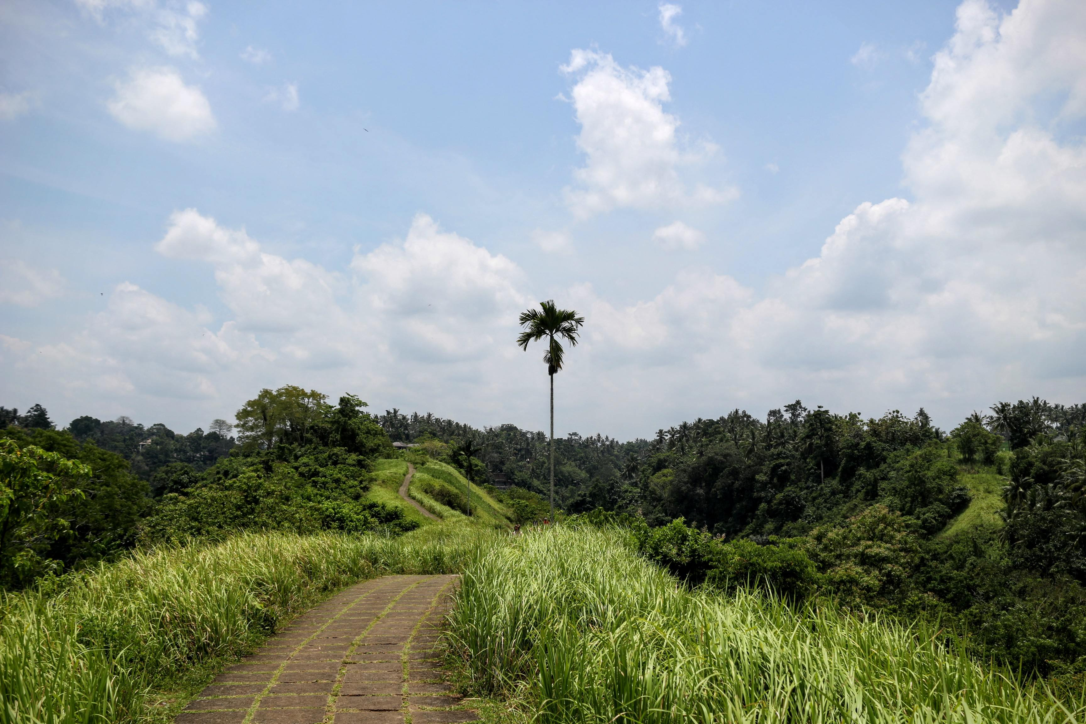 ubud-campuhan-ridge-walk