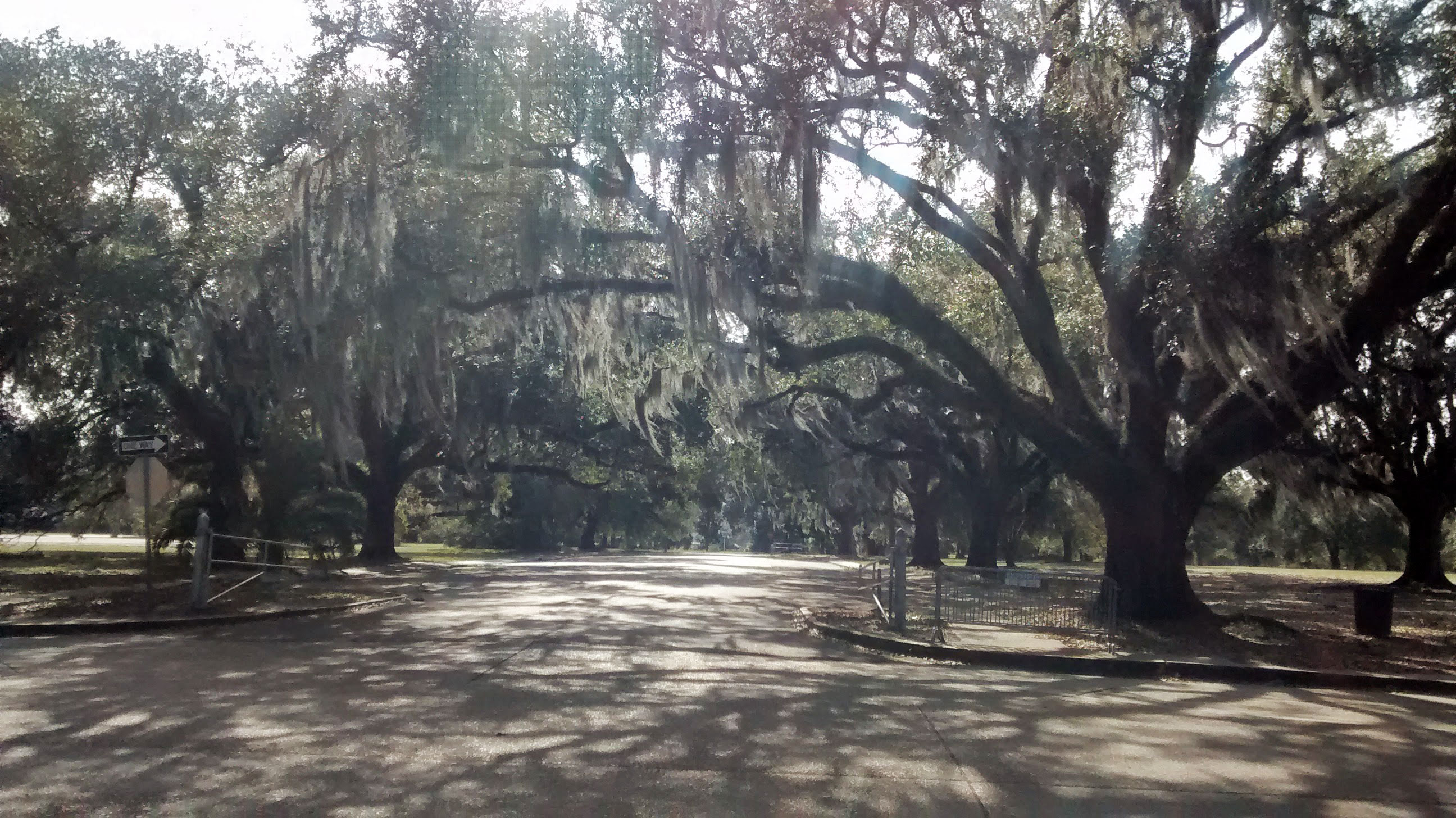 CityPark 1024x575 - Visiting New Orleans In January: Top 8 Things To Do